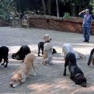 thumbs des chiens fun 028 Des Chiens Fun =D (110 photos)