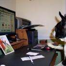 thumbs des chiens fun 034 Des Chiens Fun =D (110 photos)