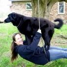 thumbs des chiens fun 048 Des Chiens Fun =D (110 photos)