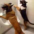 thumbs des chiens fun 049 Des Chiens Fun =D (110 photos)