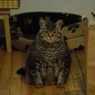 thumbs gros chats 003 Des Gros Chats ! xD (62 photos)