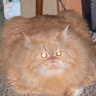 thumbs gros chats 004 Des Gros Chats ! xD (62 photos)