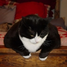 thumbs gros chats 006 Des Gros Chats ! xD (62 photos)