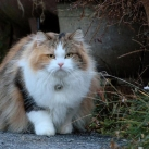 thumbs gros chats 047 Des Gros Chats ! xD (62 photos)