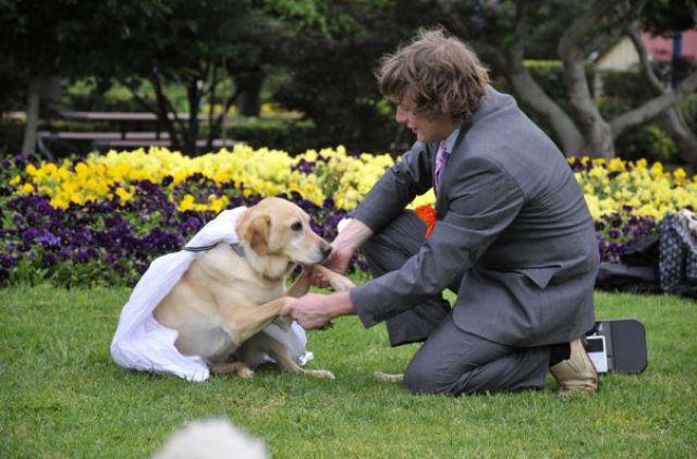 il se marie avec un chien 001 Il se marie avec un Chien ! (17 photos)