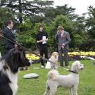 thumbs il se marie avec un chien 002 Il se marie avec un Chien ! (17 photos)