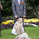 thumbs il se marie avec un chien 005 Il se marie avec un Chien ! (17 photos)