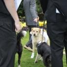thumbs il se marie avec un chien 007 Il se marie avec un Chien ! (17 photos)