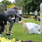 thumbs il se marie avec un chien 009 Il se marie avec un Chien ! (17 photos)