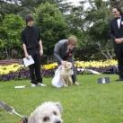 thumbs il se marie avec un chien 011 Il se marie avec un Chien ! (17 photos)