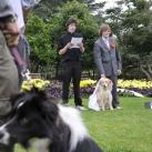 thumbs il se marie avec un chien 012 Il se marie avec un Chien ! (17 photos)