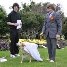 thumbs il se marie avec un chien 015 Il se marie avec un Chien ! (17 photos)