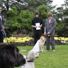 thumbs il se marie avec un chien 016 Il se marie avec un Chien ! (17 photos)