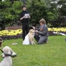 thumbs il se marie avec un chien 017 Il se marie avec un Chien ! (17 photos)