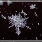 thumbs la beaute des flocons de neige 004 La beauté des flocons de neige (49 photos)