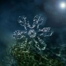 thumbs la beaute des flocons de neige 016 La beauté des flocons de neige (49 photos)
