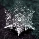 thumbs la beaute des flocons de neige 018 La beauté des flocons de neige (49 photos)
