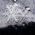 thumbs la beaute des flocons de neige 034 La beauté des flocons de neige (49 photos)
