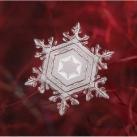 thumbs la beaute des flocons de neige 047 La beauté des flocons de neige (49 photos)