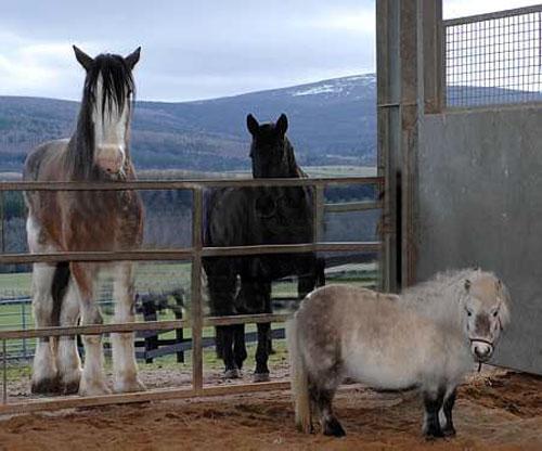 image insolite du net blog archive le plus grand cheval 8 photos. Black Bedroom Furniture Sets. Home Design Ideas