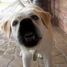thumbs les animaux leches vitres 011 Les animaux Lèches vitres x) ! (50 photos)