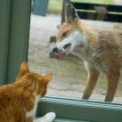 thumbs les animaux leches vitres 016 Les animaux Lèches vitres x) ! (50 photos)