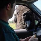 thumbs les animaux leches vitres 021 Les animaux Lèches vitres x) ! (50 photos)
