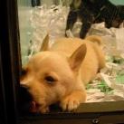 thumbs les animaux leches vitres 023 Les animaux Lèches vitres x) ! (50 photos)