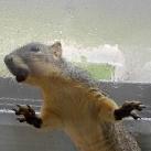 thumbs les animaux leches vitres 025 Les animaux Lèches vitres x) ! (50 photos)