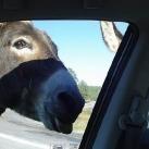 thumbs les animaux leches vitres 027 Les animaux Lèches vitres x) ! (50 photos)