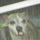 thumbs les animaux leches vitres 031 Les animaux Lèches vitres x) ! (50 photos)
