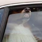 thumbs les animaux leches vitres 033 Les animaux Lèches vitres x) ! (50 photos)