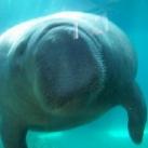 thumbs les animaux leches vitres 039 Les animaux Lèches vitres x) ! (50 photos)