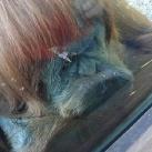 thumbs les animaux leches vitres 041 Les animaux Lèches vitres x) ! (50 photos)