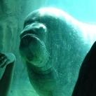 thumbs les animaux leches vitres 045 Les animaux Lèches vitres x) ! (50 photos)