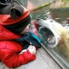 thumbs les animaux leches vitres 050 Les animaux Lèches vitres x) ! (50 photos)