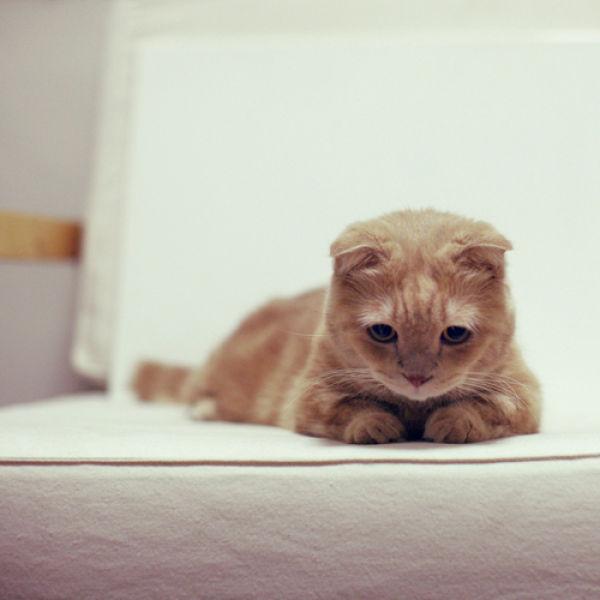 les chats peluches 027 Les Chats Peluches (34 photos)
