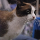 thumbs les chats peluches 005 Les Chats Peluches (34 photos)