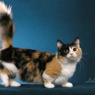thumbs les chats peluches 006 Les Chats Peluches (34 photos)