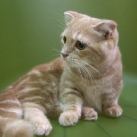 thumbs les chats peluches 009 Les Chats Peluches (34 photos)