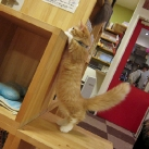 thumbs les chats peluches 012 Les Chats Peluches (34 photos)