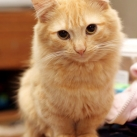 thumbs les chats peluches 017 Les Chats Peluches (34 photos)