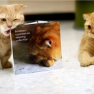 thumbs les chats peluches 019 Les Chats Peluches (34 photos)