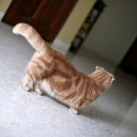 thumbs les chats peluches 022 Les Chats Peluches (34 photos)