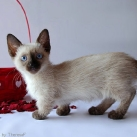 thumbs les chats peluches 025 Les Chats Peluches (34 photos)