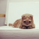 thumbs les chats peluches 027 Les Chats Peluches (34 photos)