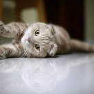 thumbs les chats peluches 030 Les Chats Peluches (34 photos)