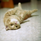 thumbs les chats peluches 034 Les Chats Peluches (34 photos)