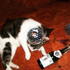 thumbs image insolite net033 Animaux Fun (46 photos)