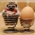 thumbs image insolite net059 Animaux Fun (46 photos)